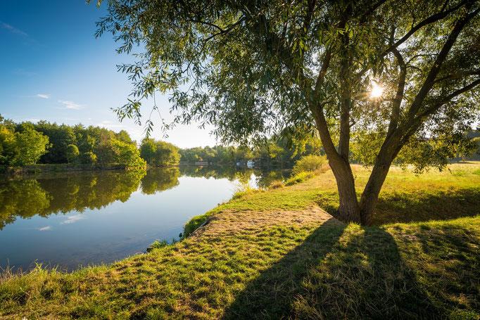 Baum und Saale in Wörmlitz