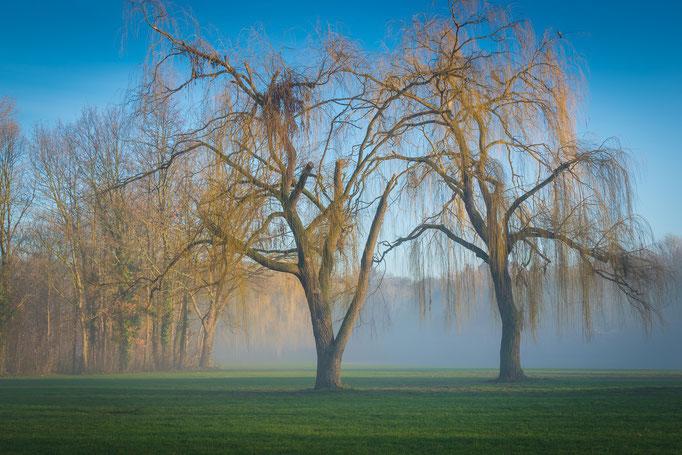 Bäume an der Fontäne