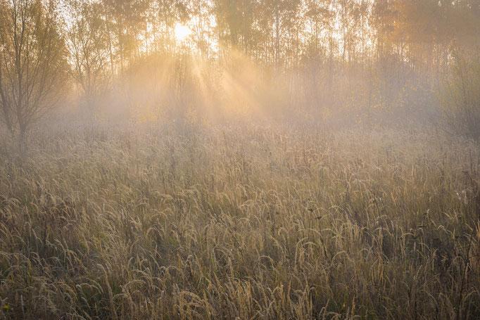 Sonnenaufgang im Herbst mit Nebel