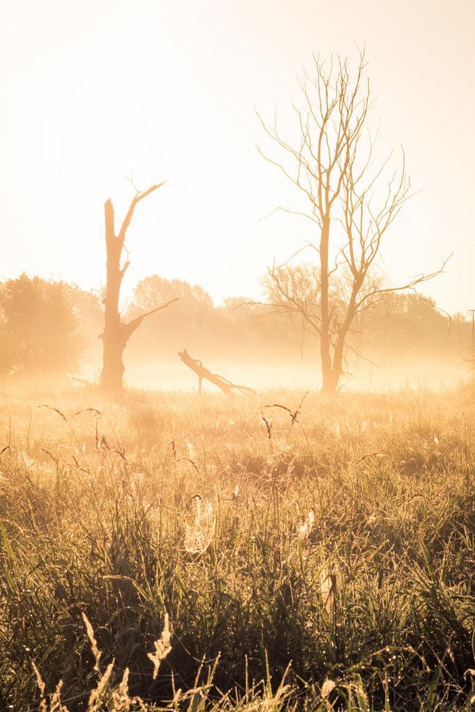 Saaleaue im Sonnenaufgang mit Nebel