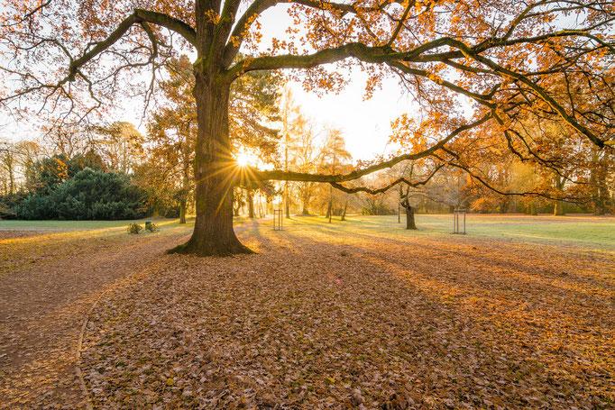 Sonnenaufgang im Gimritzer Park an einem Tag im Herbst