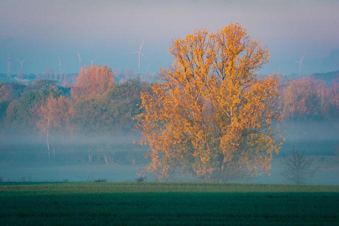 Baum in Böllberg-Wörmlitz im Nebel