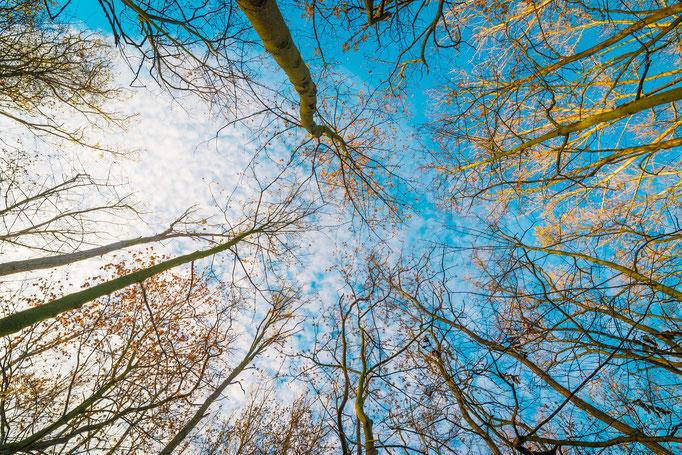 Bäume am Hufeisensee