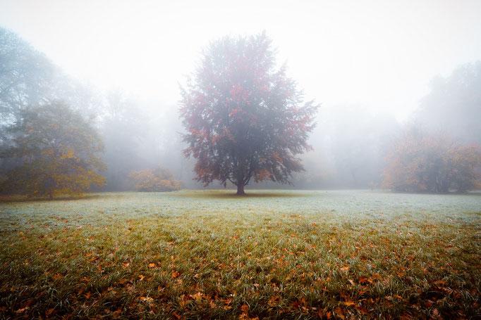Baum im Gimritzer Park im Nebel