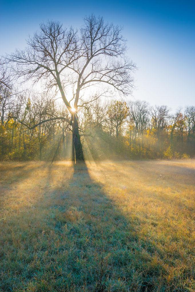 Baum im Nebel und Licht der Sonne