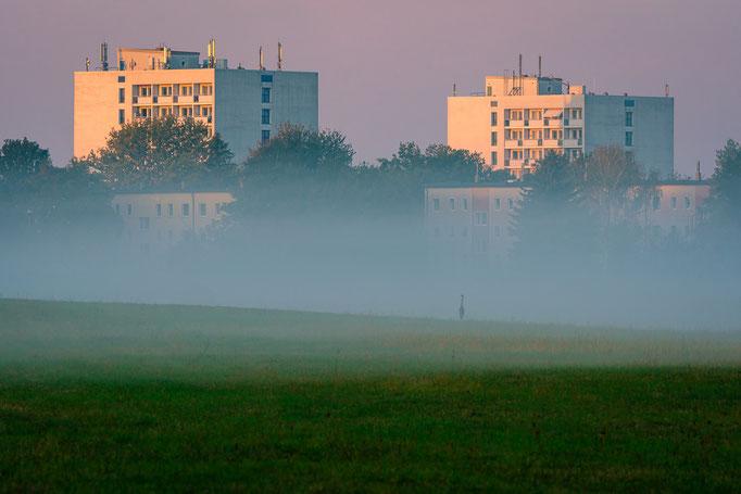 Reiher auf Feld im Nebel und Hochhäuser in Trotha