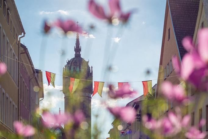 Schlosskirche in Lutherstadt Wittenberg