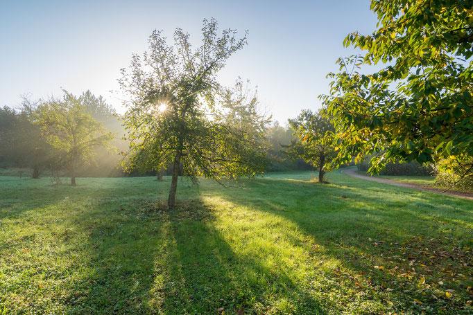 Herbstmorgen am Bruchsee