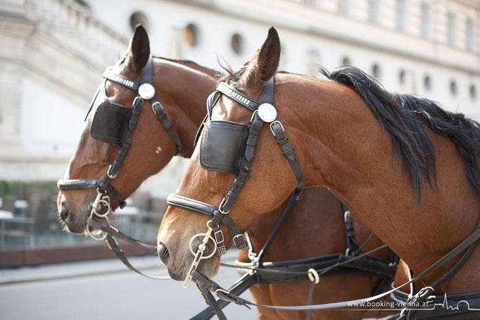Fiaker Liebhaber, booking Vienna, günstige Hotels Wien, Hotel Wien im Zentrum buchen