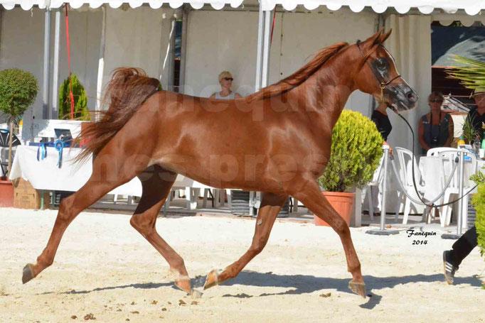 Concours national de Nîmes - MYSS SASKIA - Notre Sélection - 15