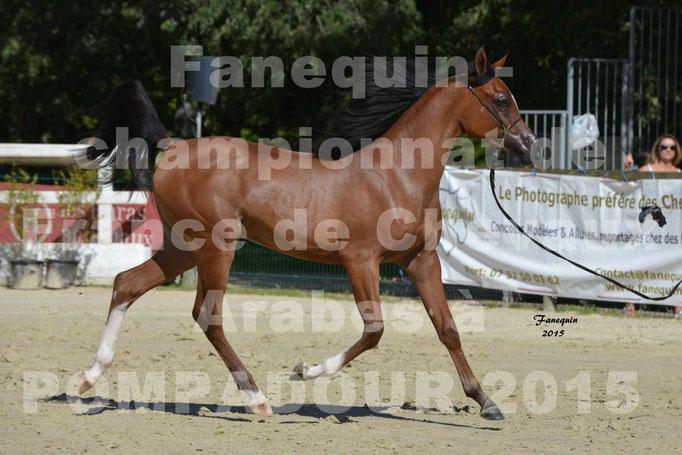 Championnat de FRANCE du cheval ARABE à POMPADOUR 2015 - Classes PROFESSIONNELS - PRIMERIUS EMER - 05