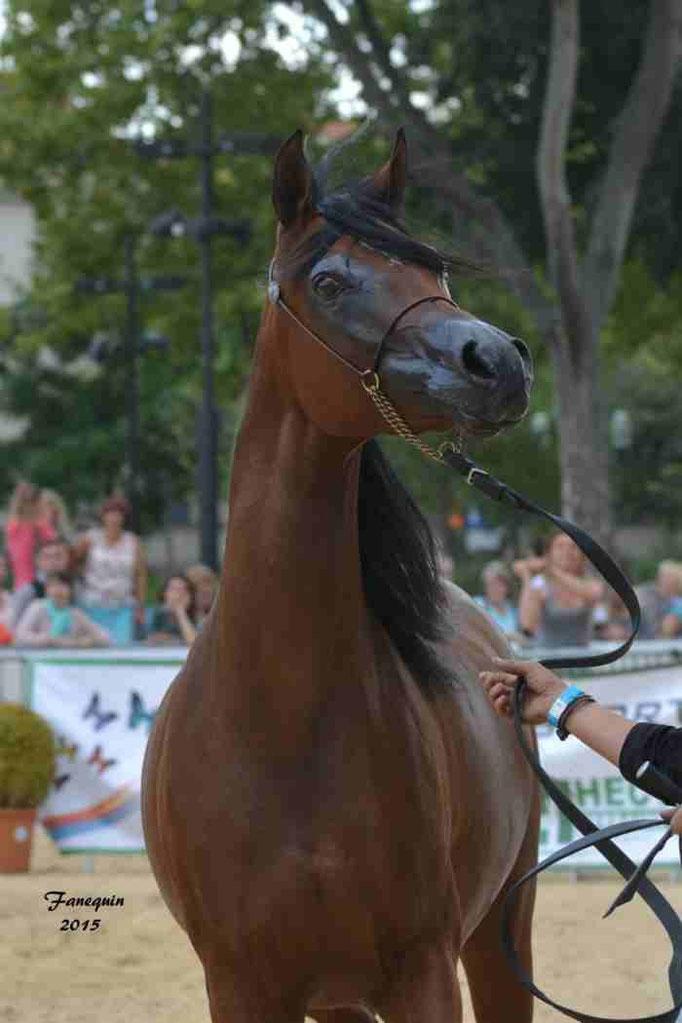 KARAWAN ALBIDAYER en 2015 - Concours national Nîmes prestige - notre sélection - Portraits - 2