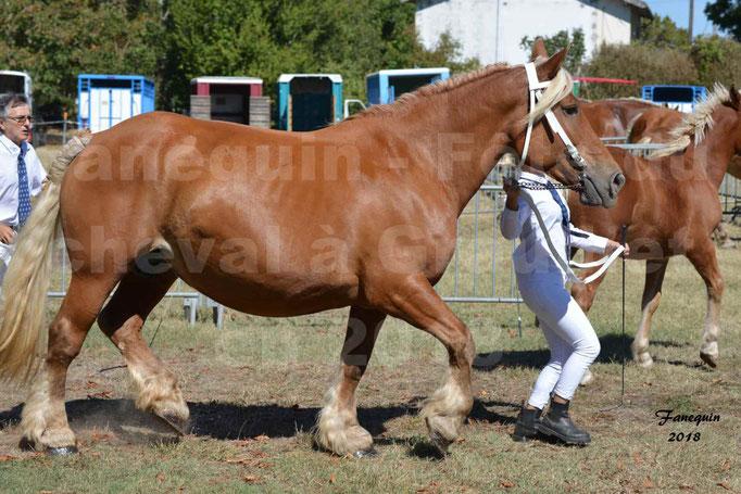 Fête du cheval à GRAULHET le 16 septembre 2018 - Concours Départemental de chevaux de traits - 42