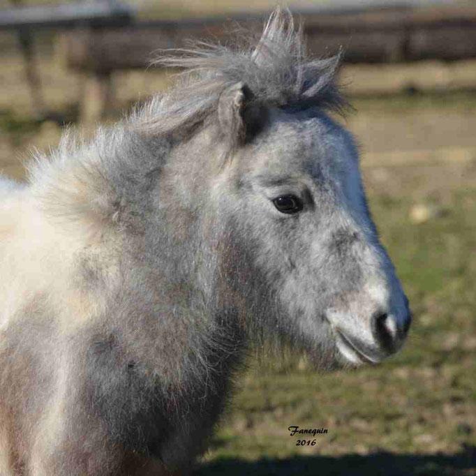 Elevage EL MAGLEP - Groupe de poneys - En Liberté - 20