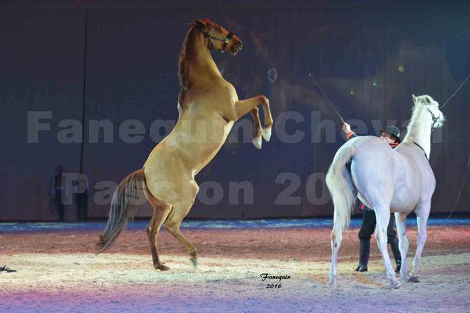 Cheval Passion 2016 - Gala des Crinières d'OR - ASSIRE BECAR
