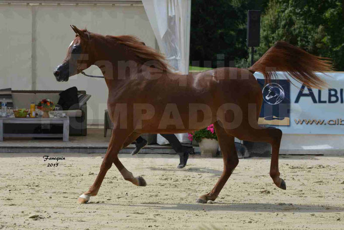 Championnat de FRANCE des chevaux ARABES à Pompadour - PEARL DE DJOON - Notre Sélection - 07