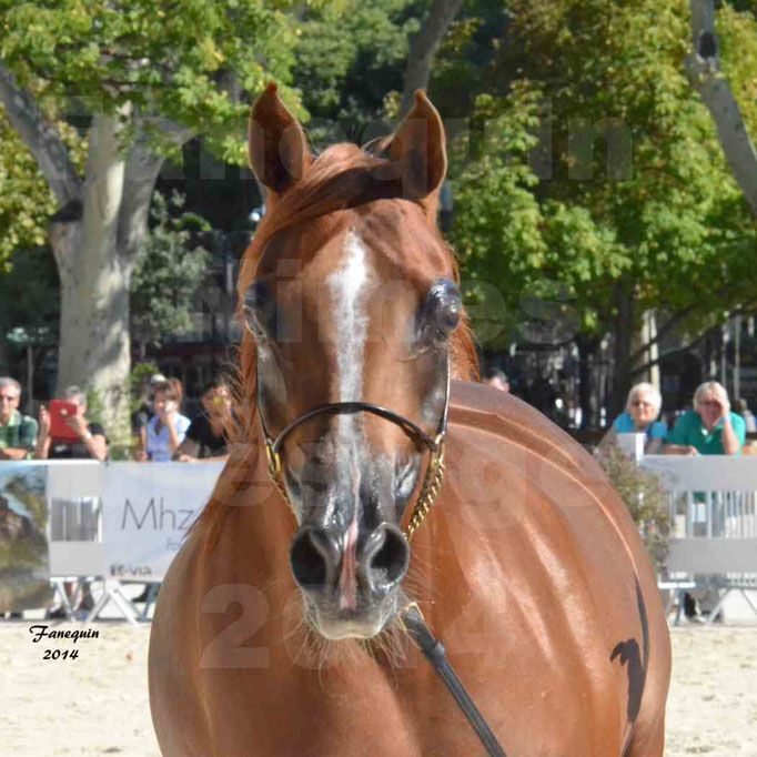 Concours national de Nîmes - MYSS SASKIA - Portraits - 11