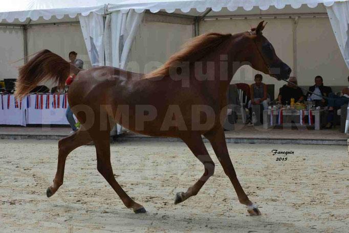 Championnat de FRANCE des chevaux ARABES à Pompadour - PEARL DE DJOON - Notre Sélection - 01