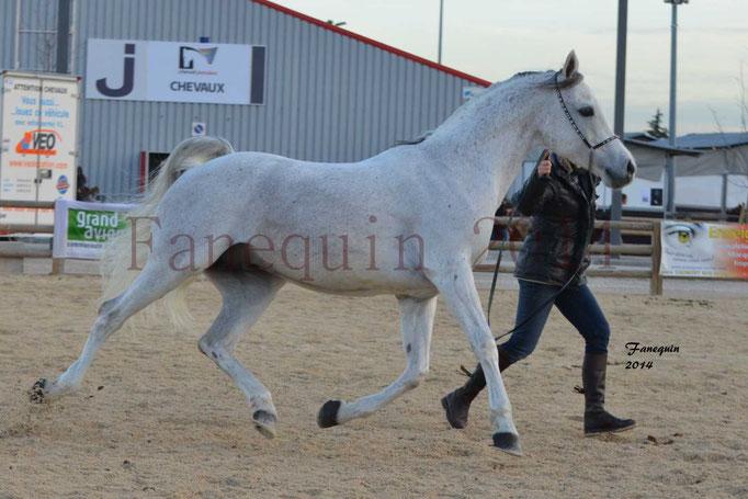 Etalon d'Endurance gris 23