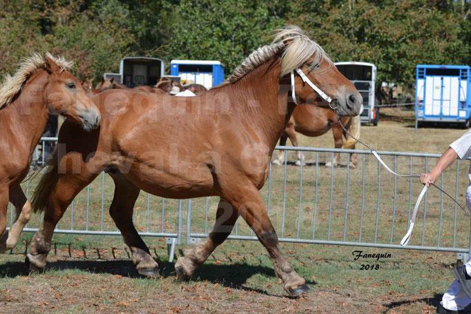 Fête du cheval à GRAULHET le 16 septembre 2018 - Concours Départemental de chevaux de traits - 37