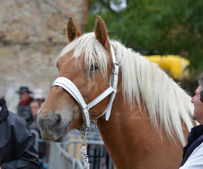 Fête du cheval à Graulhet le 17 septembre 2017 - chevaux de traits - 1