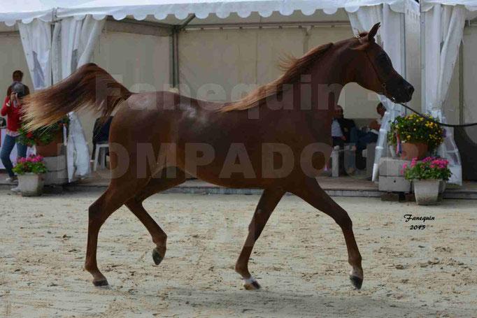 Championnat de FRANCE des chevaux ARABES à Pompadour - PEARL DE DJOON - Notre Sélection - 02