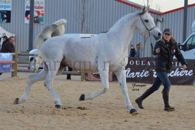Etalon d'Endurance gris 14