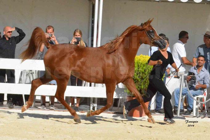 Concours national de Nîmes - MYSS SASKIA - Notre Sélection - 06