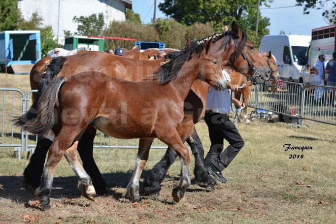 Fête du cheval à GRAULHET le 16 septembre 2018 - Concours Départemental de chevaux de traits - 30