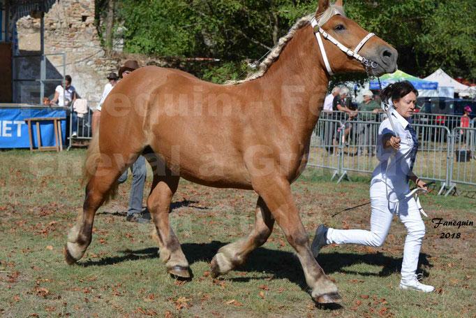 Fête du cheval à GRAULHET le 16 septembre 2018 - Concours Départemental de chevaux de traits - 07