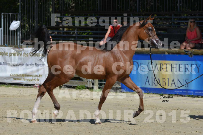 Championnat de FRANCE du cheval ARABE à POMPADOUR 2015 - Classes PROFESSIONNELS - PRIMERIUS EMER - 08