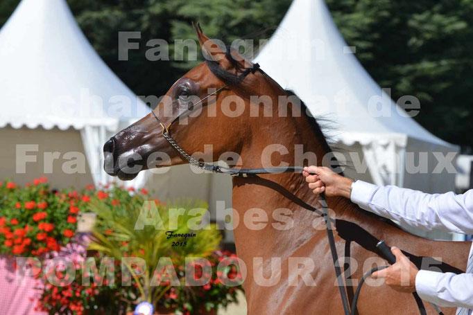 Championnat de FRANCE du cheval ARABE à POMPADOUR 2015 - Classes PROFESSIONNELS - PRIMERIUS EMER - Portraits - 3
