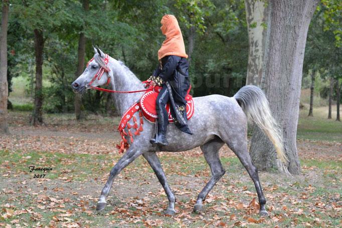 Fête du cheval à Graulhet le 17 septembre 2017 - Présentation élevage de GACIA - 2