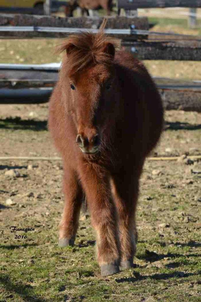 Elevage EL MAGLEP - Groupe de poneys - En Liberté - 04