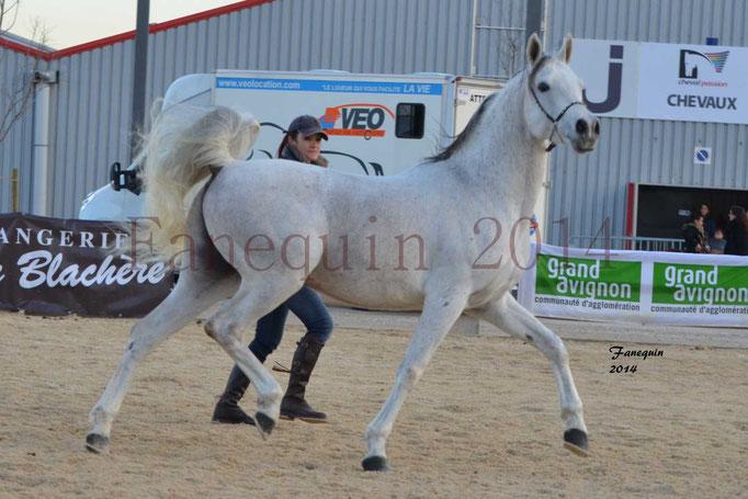 Etalon d'Endurance gris 18
