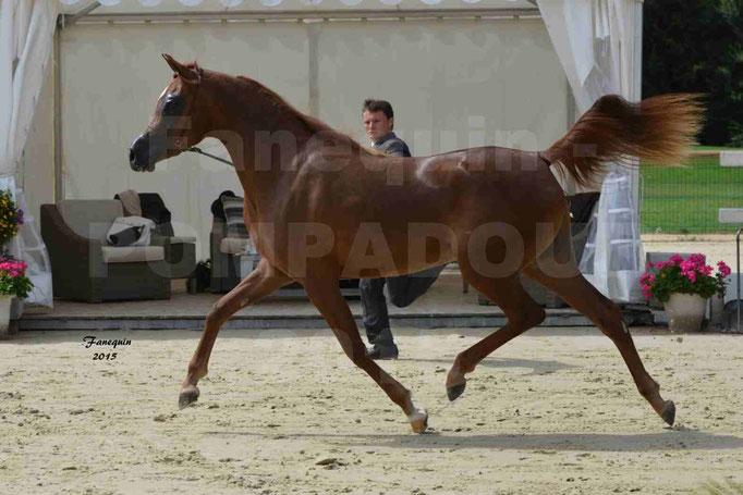 Championnat de FRANCE des chevaux ARABES à Pompadour - PEARL DE DJOON - Notre Sélection - 08