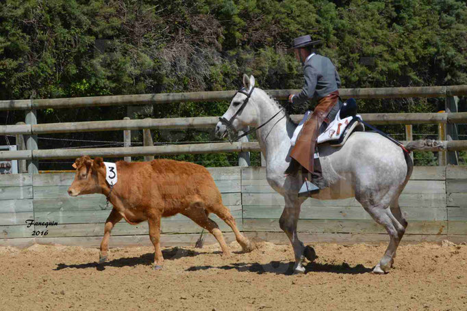 Festival EQUESTRIUM 2016 - Démonstration équitation de travail - cheval IBERIQUE