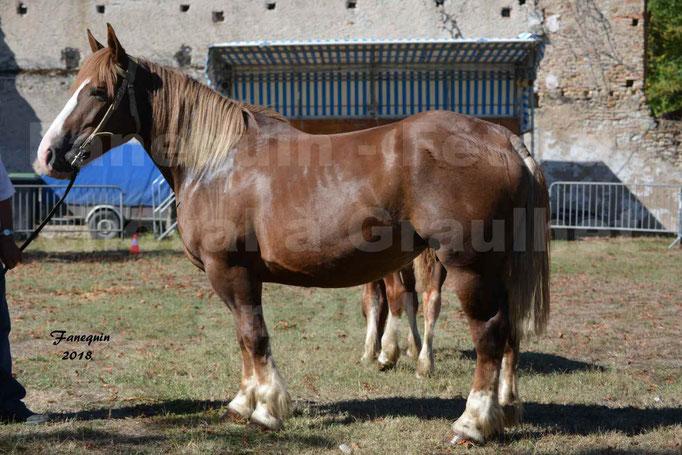 Fête du cheval à GRAULHET le 16 septembre 2018 - Concours Départemental de chevaux de traits - 21