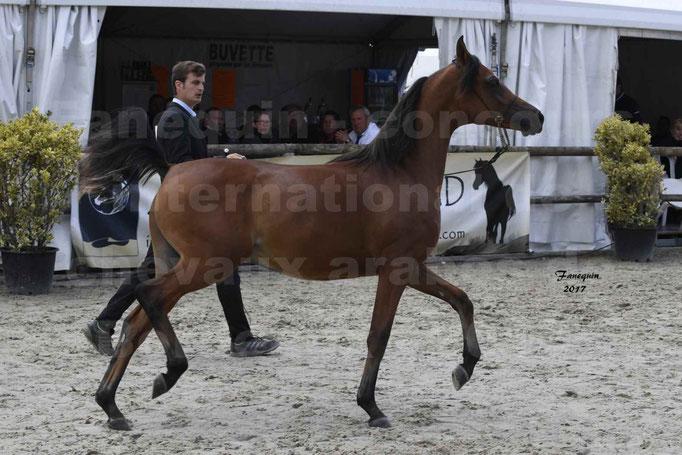 """Concours international de chevaux ARABES - """"Arabian Masters"""" Bordeaux 2017 - JABBOK DE NAUTIAC - 01"""