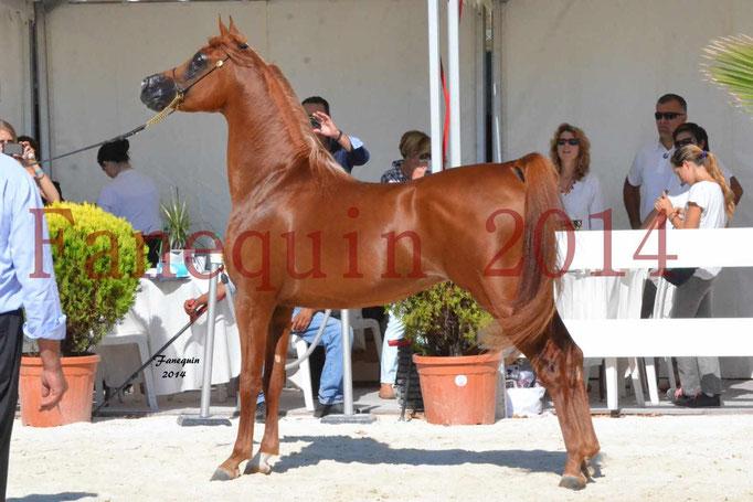 Concours National de Nîmes de chevaux ARABES 2014 - Notre Sélection - PRIAM DE DJOON - 25