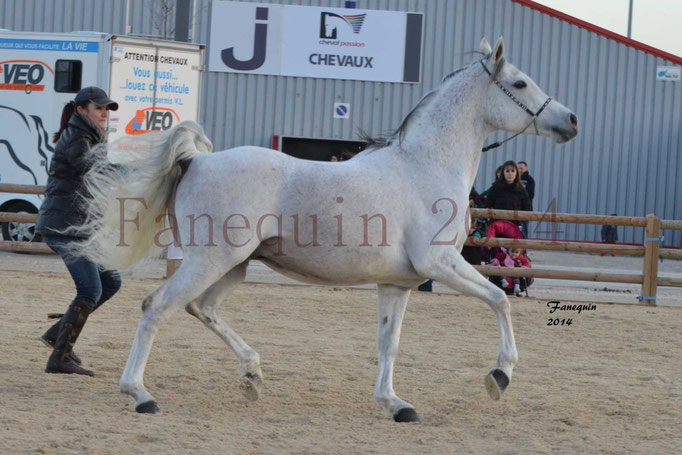 Etalon d'Endurance gris 20