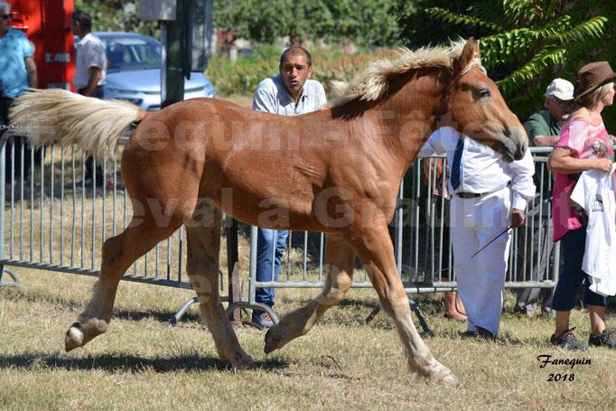 Fête du cheval à GRAULHET le 16 septembre 2018 - Concours Départemental de chevaux de traits - 38