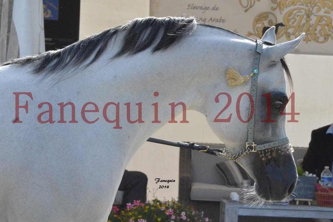 CHAMPIONNAT DE FRANCE  2014 A POMPADOUR - Notre Sélection - Portraits - NADJIK DES AUBUES - 4