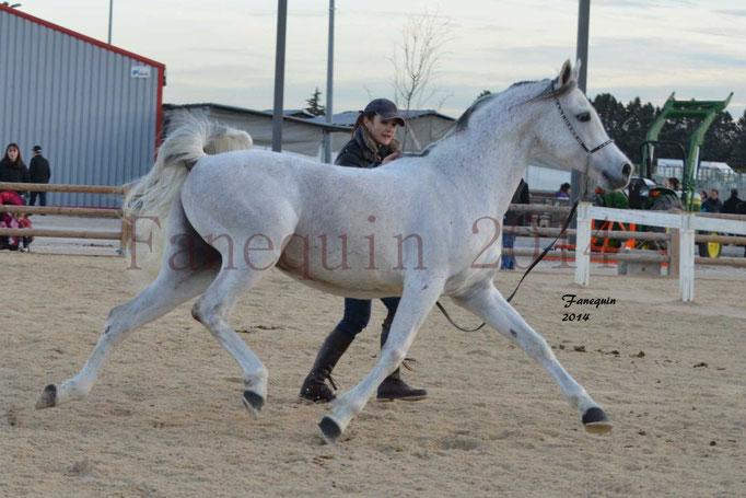 Etalon d'Endurance gris 25