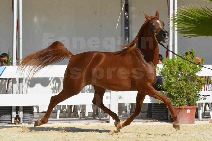 Concours national de Nîmes - MYSS SASKIA - Notre Sélection - 12