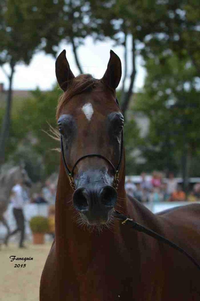 KARAM ALBIDAYER en 2015 - Concours national Nîmes prestige - notre sélection - Portraits - 3