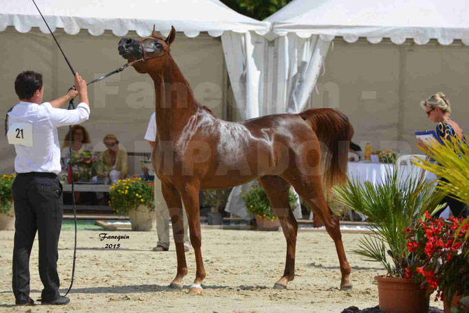 Championnat de FRANCE des chevaux ARABES à Pompadour - PEARL DE DJOON - Notre Sélection - 37