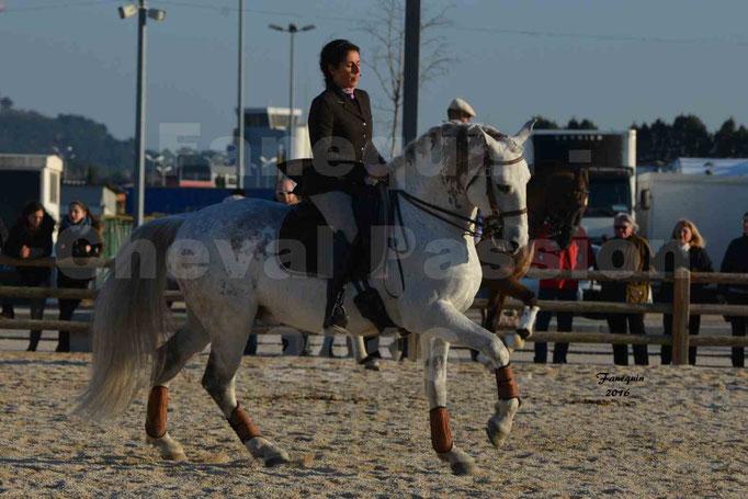 Cheval Passion 2016 - Présentation des LUSITANIENS - Échauffement extérieur -  2