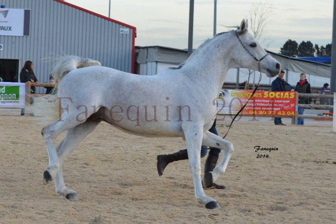 Etalon d'Endurance gris 24