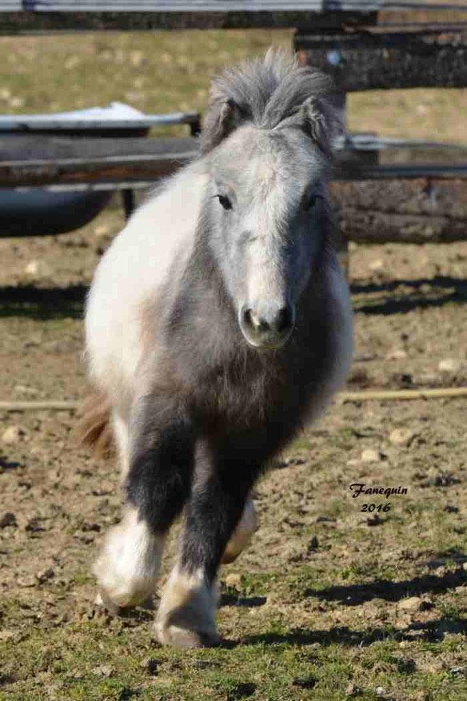 Elevage EL MAGLEP - Groupe de poneys - En Liberté - 13
